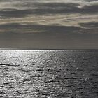open water by Alan McNeice