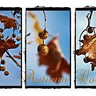 Autumn Colour by Barb Leopold