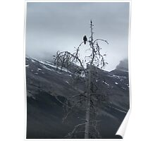 Solitary Raven Poster