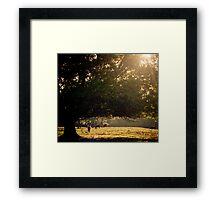 Florida Pasture Framed Print
