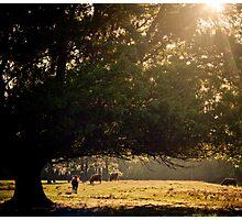 Florida Pasture Photographic Print