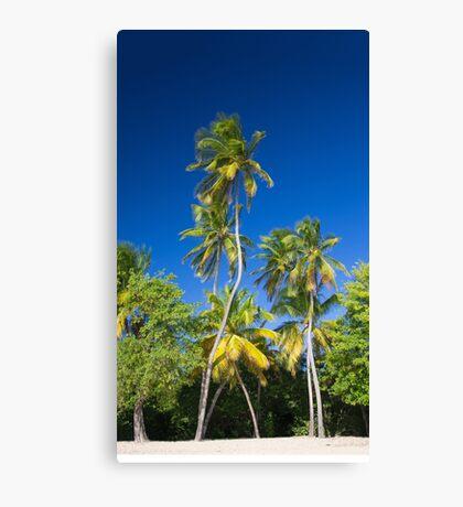 Coconut Palms on Tropical Island Canvas Print