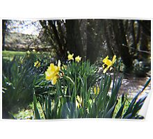 Spring at Sandyhill Poster