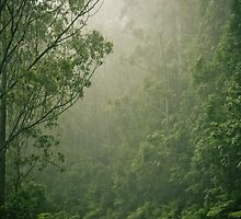 Mystical Forest by therkd