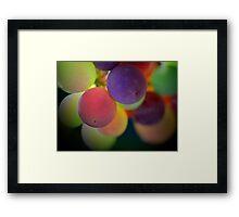 Multi-coloured grapes - Hunter Valley, NSW Framed Print