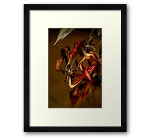 Tulip's Demise - A Natural Abstract Framed Print
