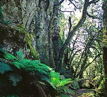 Escarpment walk - New England National Park NSW, by graphicscapes