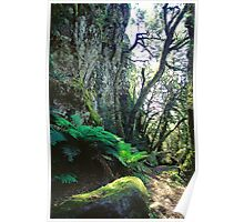 Escarpment walk - New England National Park NSW, Poster
