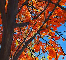 Fall trees by Barbara Weir