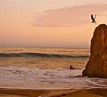 Seagull Takes Flight Off The Rock by Ray Schiel