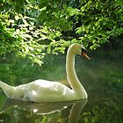White Swan by Joyce Keevil