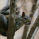 Squirrel by Diana Forgione