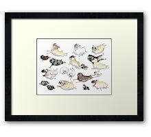 Pugs on the Run! Framed Print