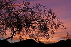 Desert Sky, Tree Silhouette by Ray Schiel