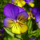 Purple and Yellow Vibrancy by Kimberly Caldwell