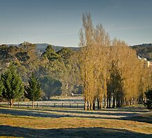 Frosty but Fine - near Hahndorf by Barb Leopold