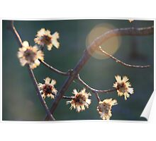 Chinese Maple Shoots Poster