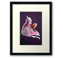 "Lilium ""Stargazer"" Framed Print"