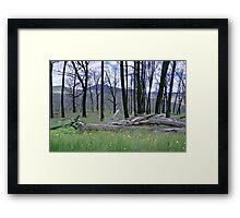 Fire Blackened Beech Trees - Kosciuszko NP NSW, Framed Print