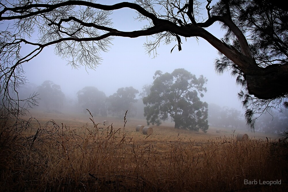 Foggy Summer Evening, Mount Barker by Barb Leopold