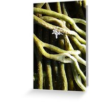 Sponge Fingers and White Weed...with Sprinkles.. Greeting Card
