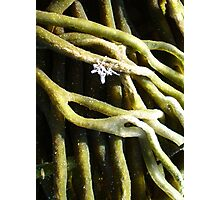 Sponge Fingers and White Weed...with Sprinkles.. Photographic Print