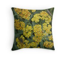 Yarrow (Achillea 'Terracotta') and Fly Throw Pillow