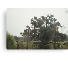 Hidden Cows Canvas Print