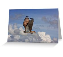 Fly By! Greeting Card