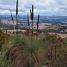 View from the Summit by Barb Leopold