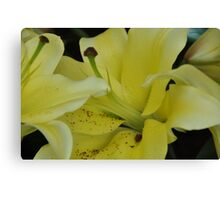 Yellow Suits You Canvas Print
