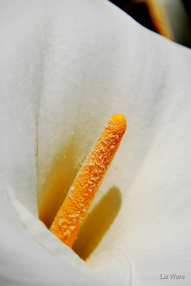 Lily - Rancho Cucamonga, CA by Liz Ware