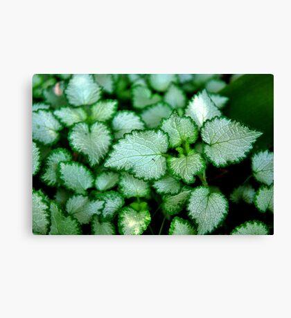 Silver Leaves - Rancho Cucamonga, CA Canvas Print