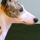 It's a Whippet. Part 1 of a series by copperhead