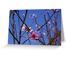 Pink Peach Blossoms in a Blue Sky Greeting Card