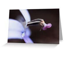 Isotoma axillaris Greeting Card