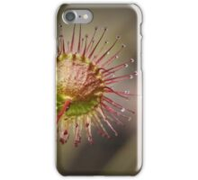 Climbing Sundew, Rear View iPhone Case/Skin