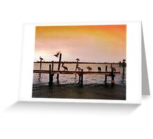 Pelicans on Pier - North Carolina Greeting Card