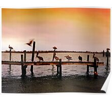 Pelicans on Pier - North Carolina Poster