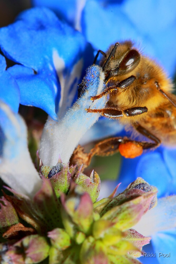 Blue Bumble Bee by Rikki  Pool