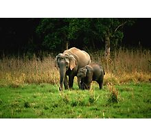 Elephant family - Learn care from the biggest land mammal Photographic Print