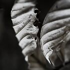 Skeletal Leaves by Sam Mortimer