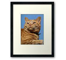 ginger cat Framed Print