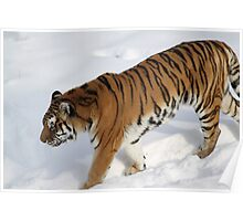 On the Prowl, The snow of Minnesota zoo Poster