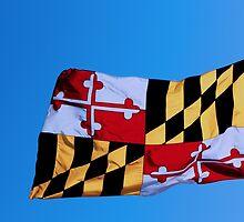 Maryland State Flag by Thad Zajdowicz
