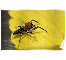 Colourful Spider.... Poster