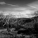 Mt Hotham by Judith Cahill