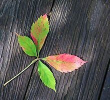 Four Leaves by Eileen McVey