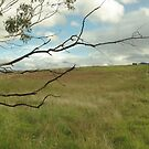 Out and about, in the paddocks near Tidbinbilla by halogen