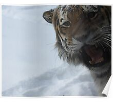 On the Prowl 3, The snow of Minnesota zoo Poster